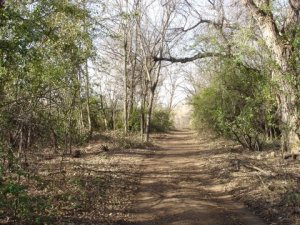After picture of the trail. The open, parklike setting is more inviting for visitors, and makes way for native plant regeneration.